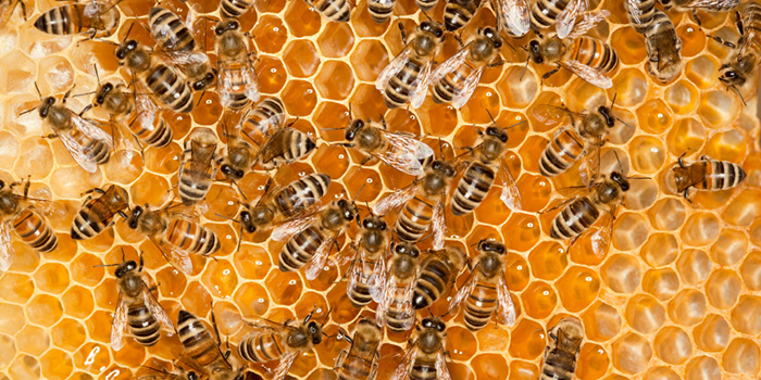 Latest On Save The Bees Vs Capilano Honey Part 2 | Beyond Infinity